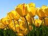 Quà tặng nhân ngày 8 – 3 - MỘT KHÚC DÂN CA – GỬI CẢ CÂU CHUYỆN TÌNH